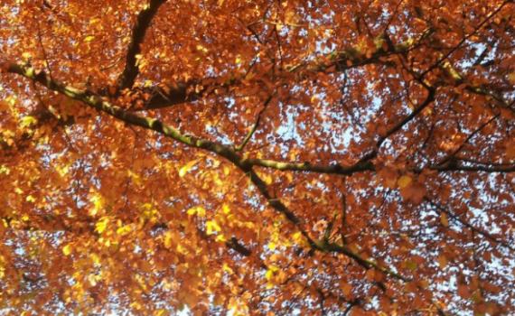 © Çiğdem Gül_Autumn in Wuppertal_Germany_2