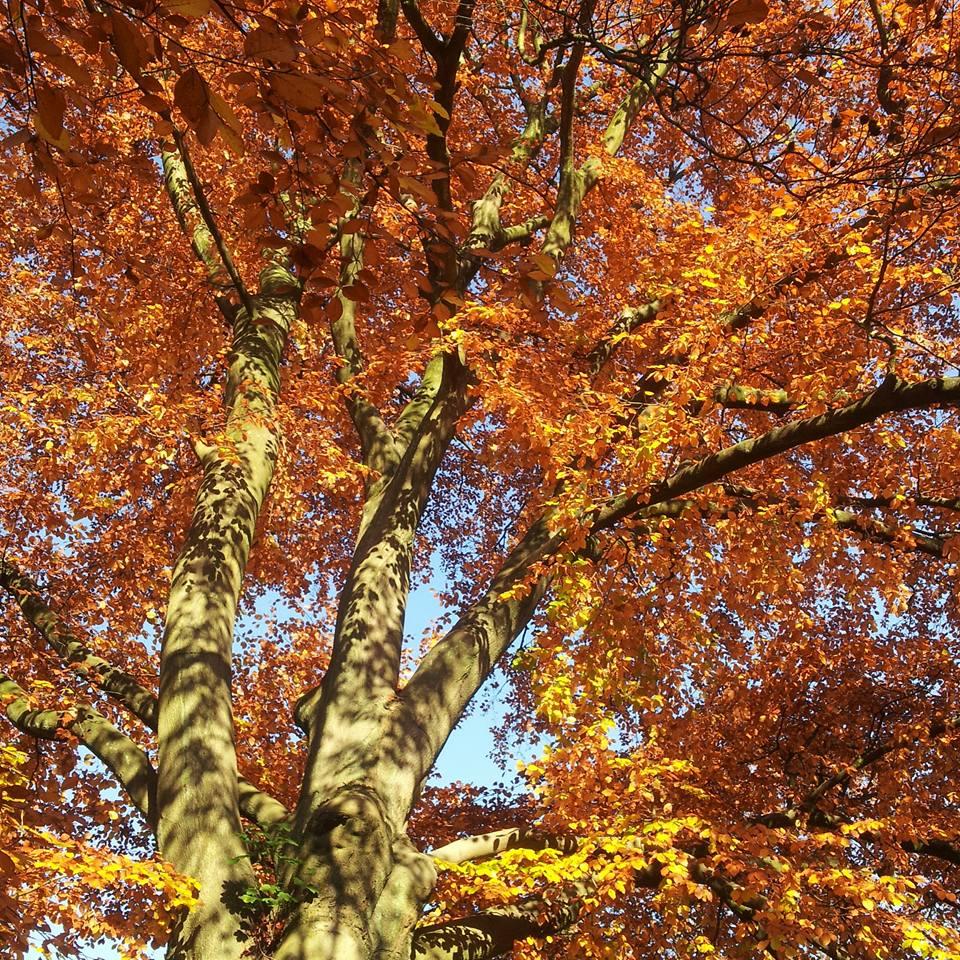 © Çiğdem Gül_Autumn in Wuppertal_Germany_1