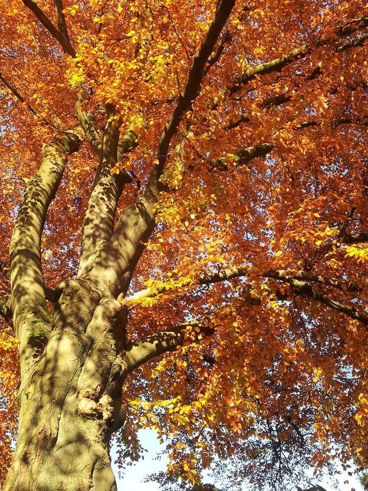 © Çiğdem Gül_Autumn in Wuppertal_Germany_3
