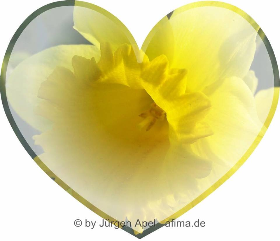 Graphic representation of an artistic and colorful heart with a yellow flower