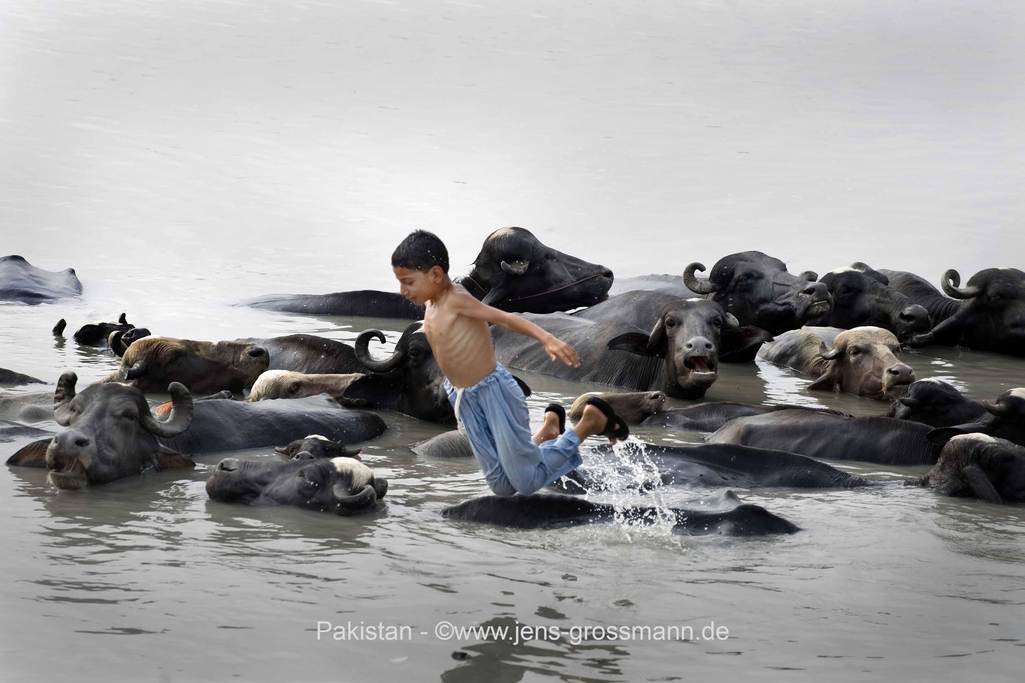 Pakistan, Peshawar, Pir Sabaq, Junge mit Viehherde in Wasser
