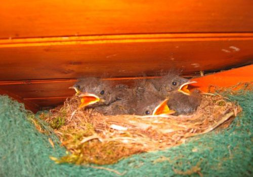 Bettina Vogel _ Vögel auf Dachstuhl in der französischen Atlantikküste