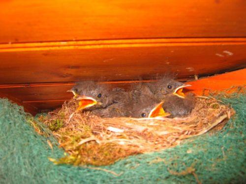 Vögel auf dachstuhl in der französischen Atlantikküste